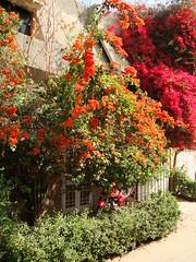 Fakhar Lodge (Fakhar.Alam) Tags: fakhar alam yalmaz mumtazabad multan pakistan spring