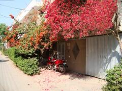 Spring's in the air! (Fakhar.Alam) Tags: fakhar alam yalmaz mumtazabad multan pakistan spring 1043c