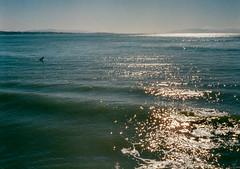 Capitola, California (bior) Tags: capitola california pacificocean ocean shore coast beach santacruz fujicahalf kodakgold expiredfilm surfer surfing