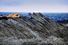 Rock strata (Greenstone Girl) Tags: earthquakeuplift sharprockyshorelines limestone sea pointkean kaikoura strata folded