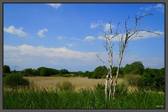 Landschaft (tingel79) Tags: landscape landschaft baum tree totholz trocken natur nature outdoor grün sky himmel photographie photography sony sonya6500 cloud wolken world day germany haussee