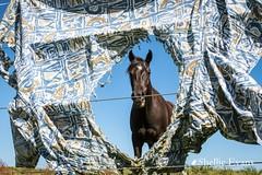 Naughty Horse, Tokerau Beach, Far North (flyingkiwigirl) Tags: camp christmas doc farnorth holiday horses maitaibay mangonui nzmca puheke rain summer tokeraubeach waikatobay waimangoroad weather whitesand
