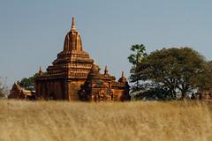 Bagan Temple in Tall Grass, Myanmar (AdamCohn) Tags: adam cohn adamcohn bagan burma myanmar oldbagan pagoda paya streetphotographer streetphotography stupa temple temples wwwadamcohncom