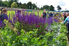 """Sensory Balance"" Long Border (Bri_J) Tags: rhs chatsworthflowershow2019 chatsworthhouse edensor derbyshire uk chatsworth flowershow nikon d7500 sensorybalance longborder flowers carlsonandstevens"