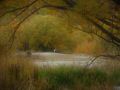 romantic rendezvous (SM Tham) Tags: newzealand southisland arrowtown arrowriver river creek trees branches autumn fall foliage couple people landscape