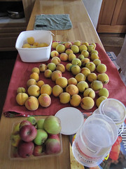 Apples & Peaches – Red Moon Sanctuary, Redmond, Western Australia (Red Moon Sanctuary) Tags: farm garden produce redmond 6327 greatsouthern westernaustralia wa redmoonsanctuary australia au