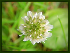 A Flower (Dims Dallaire) Tags: flower