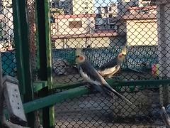 Birds (ahashik) Tags: ayemun hossain ashik ayemunhossainashik ahashik ah birds natural animals
