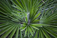 Palm (Pieter Musterd) Tags: kijkduin kijkduinopdeschop pietermusterd musterd canon pmusterdziggonl nederland holland nl canon5dmarkii canon5d denhaag 'sgravenhage thehague lahaye