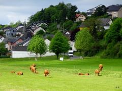Maare-Mosel Radweg - Nord (jeanclaudedlg) Tags: deutschland eifel rp radweg maaremoselradweg maare daun