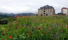 Flores y más flores (eitb.eus) Tags: eitbcom 16599 g1 tiemponaturaleza tiempon2019 flora gipuzkoa irun josemariavega