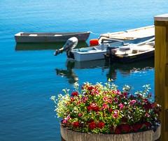 Edge of Summer (Bud in Wells, Maine) Tags: maine wells wellsharbor spring flowers boats dof bokeh