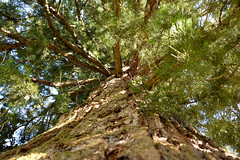 Dordogne (geraldineh.dutilly) Tags: tree light nature green woods forest