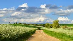 A festive farm track, Farnborough, Berkshire, England (Oswald Bertram) Tags: berkshiredowns westberkshire countryside northwessexdowns northwessexdownsaonb spring printemps primavera frühling landschaft landscape paisaje paysage paesaggio greatbritain uk