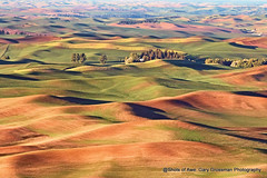 Good Morning Palouse! (Gary Grossman) Tags: dawn palouse prairie farm farming morning wheat lentils crops steptoe northwest washington spring may landscape garygrossman garygrossmanphotography palousehills landscapephotography pacificnorthwest steptoebutte goldenhour color
