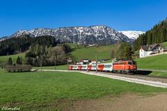 "ÖBB 1142 564 ""Flurli"" bei Edlbach (TheKnaeggebrot) Tags: öbb 1142 1142564 blutorange pflatsch pyhrnbahn rex regionalexpress spital am pyhrn edlbach alpenbahn eisenbahn zug train railway"