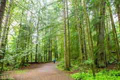 A Man Amongst Giants (Michael Muntz Photography) Tags: vancouverisland nanaimo bc canada trip vacation trees green spring summer seasonal nature landscape outdoors earth
