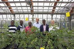 Pflanzenvirus bedroht Grundnahrungsmittel in Afrika (sven.david.mueller) Tags: cassava dsmz dr stephan winter gates foundation jki