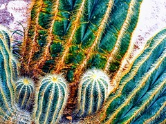 Cactus (pmorris73) Tags: smithcollege botanicalgarden northampton massachusetts 1cf2019