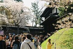The main gate (しまむー) Tags: pentax mz3 fa 43mm f19 limited kodak gold 200 弘前城 桜祭り
