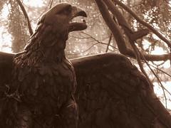 Nordfriedhof Wiesbaden - Feb. 2011 (Bea tedo) Tags: nordfriedhof wiesbaden friedhof ruhestätte grabmal statue engel sepia adler vogel