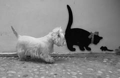 Mirando un ratón (Rabadán Fotho) Tags: bn byn bw blanconegro strettfoto strett calle blackandwhite arte art