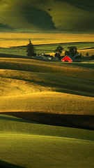 Palouse Hills at Sunrise (timexzy123) Tags: palouse hills steptoebutte statepark house curves light shadow summer morning palousehills usa washington abstract agricultural agriculture background barn builtstructure countrylife countryside curved desolate distant farm farmhouse farming farmland field ground hill hilly land landscape nature outdoors pasture remote rural rurallife rustic scenic shack shed silos sunny warmtone wooden