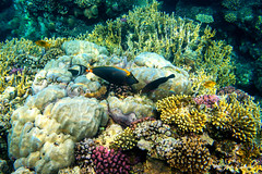 Under Water World Abu Dabbab (Jan Cancík) Tags: flóra nikon abudabbab water moře redsea coral redseagovernorate sea voda dicapacwps5 flora nikonafsnikkor1635mmf4gedvr dovolená2019 africa d800 egypt animals fauna korál egypt2019 alqusir