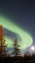 Northern lights (timexzy123) Tags: aurora auroraborealis autumn beauty fire flash forest landscape miracle mistery moon night northenlights russia siberia sky stars tundra yamal beautyinnature dramaticsky environment glowing naturalphenomena nature nonurbanscene northernlights panoramic powerinnature scenics tranquilscene tranquility tyumenregion weather