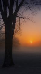 Sunrise in fog (timexzy123) Tags: golfcourse rocklandcounty sunrise fog misty mood morning trees