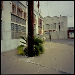 Fibers (ADMurr) Tags: la eastside industrial fibers palm pole gray hasselblad 500cm 50mm distagon zeiss dba305 fullframe