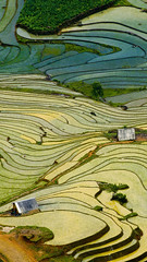 Terraced rice field (timexzy123) Tags: highland soil terraced agriculture beautyinnature day elevatedview landscape mountain paddyfield rice riceterraces scenics terracedfield tranquilscene tree vietnam village aerial birdseyeview highangleview laocai view