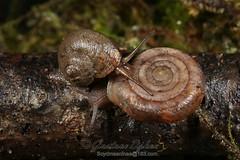 shell crash (HsiaoBian) Tags: snail