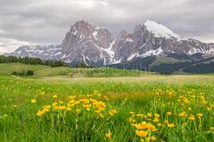 Amazing Dolomites (Kühr N.) Tags: südtirol italien italy nature landscape landschaft dolomiten dolomites dolomiti berge mountains krafttanken alm almhütten green zaun weide wandern wanderslust reisen kurzurlaub trip relax inderruheliegtdiekraft seiseralm paradies nikon nikon3100 southtyrol exploremore