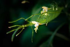 DSC_0086.jpg (markus.eymann@hotmail.ch) Tags: grün dunkel nikonistas pflanze photoshopartist adobephotoshopcc niikonphotography adobelightroom fotografie natur farbenfroh katalog