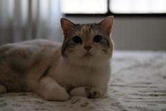 (冰冷熱帶魚) Tags: fujifilm xpro2 digital xf50mm cat tatami