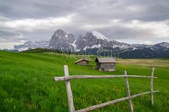 Am Weg zur Seiseralm / Südtirol (Kühr N.) Tags: südtirol italien italy nature landscape landschaft dolomiten dolomites dolomiti berge mountains krafttanken alm almhütten green zaun weide wandern wanderslust reisen kurzurlaub trip relax inderruheliegtdiekraft seiseralm paradies nikon nikon3100 southtyrol exploremore