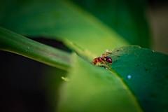 DSC_0097.jpg (markus.eymann@hotmail.ch) Tags: grün dunkel nikonistas insekt photoshopartist adobephotoshopcc niikonphotography tier adobelightroom fotografie farbenfroh katalog