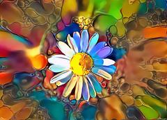 Wild-Flower-v1 (EOSXTi) Tags: wildflower photoart ddg
