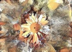 wildflower-v2 (EOSXTi) Tags: wildflower photoart