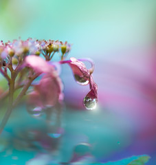 Raindrops (Tomo M) Tags: hydrangea rain weather rainyseason june flower nature tokyo bokeh waterdroplet water light reflection blur