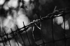 The Barb (Shastajak) Tags: barbedwire barb fence bokeh monochrome blackandwhite plasticmesh
