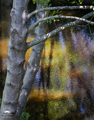 Colorful Reflections (allentimothy1947) Tags: california nature places santarosa sonomacounty springlake blue branches colorful creek green land landscape orange park reflection ripples stream trees water yellow