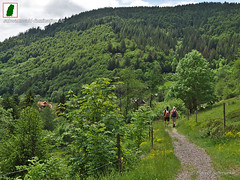 (marcel_schmurku) Tags: germany blackforest blackforestgermany blackforestgraphers visitgermany visitblackforest visitbawu visitbadenwürtemberg bwjetzt meinbw schwarzwald schwarzwaldliebe landscapephotography nature travel holiday naturelovers outdoors hiking forest natur urlaub bergen reisen heimat landschaftsfotografie wanderer