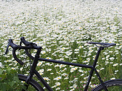 2019 Bike 180: Day 135, June 20 (olmofin) Tags: 2019bike180 flowers kukkia medow niitty bicyclle polkupyörä espoo mzuiko 45mm f18