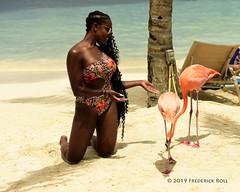 Flamingo Beach, Renaissance Island, Aruba (© Freddie) Tags: aruba oranjestad renaissanceisland bird flamingo roseateflamingo fjroll ©freddie flamingobeach