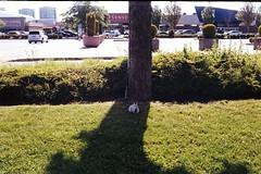 shady character (Yutaka Seki) Tags: bunny rabbit coelho conejo mall grass tree shade parkinglot smenasymbol kodakgold200 homedeveloped unicolorpresskit argentixcac41powderkit pakonf135 film analogue