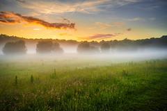 Sunset after a rainy day (David Kronfeld) Tags: coucherdesoleil paysage landscape mist sunset wildgrass