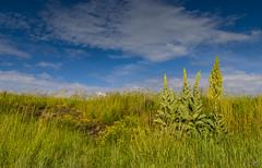 Waarde (Omroep Zeeland) Tags: waarde getijdenhaventje westerschelde zeedijk koningskaarsen dijkbekleding natuur