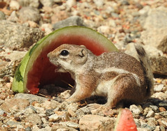 OMG Watermelon!!! (Sharon in Llano) Tags: elements